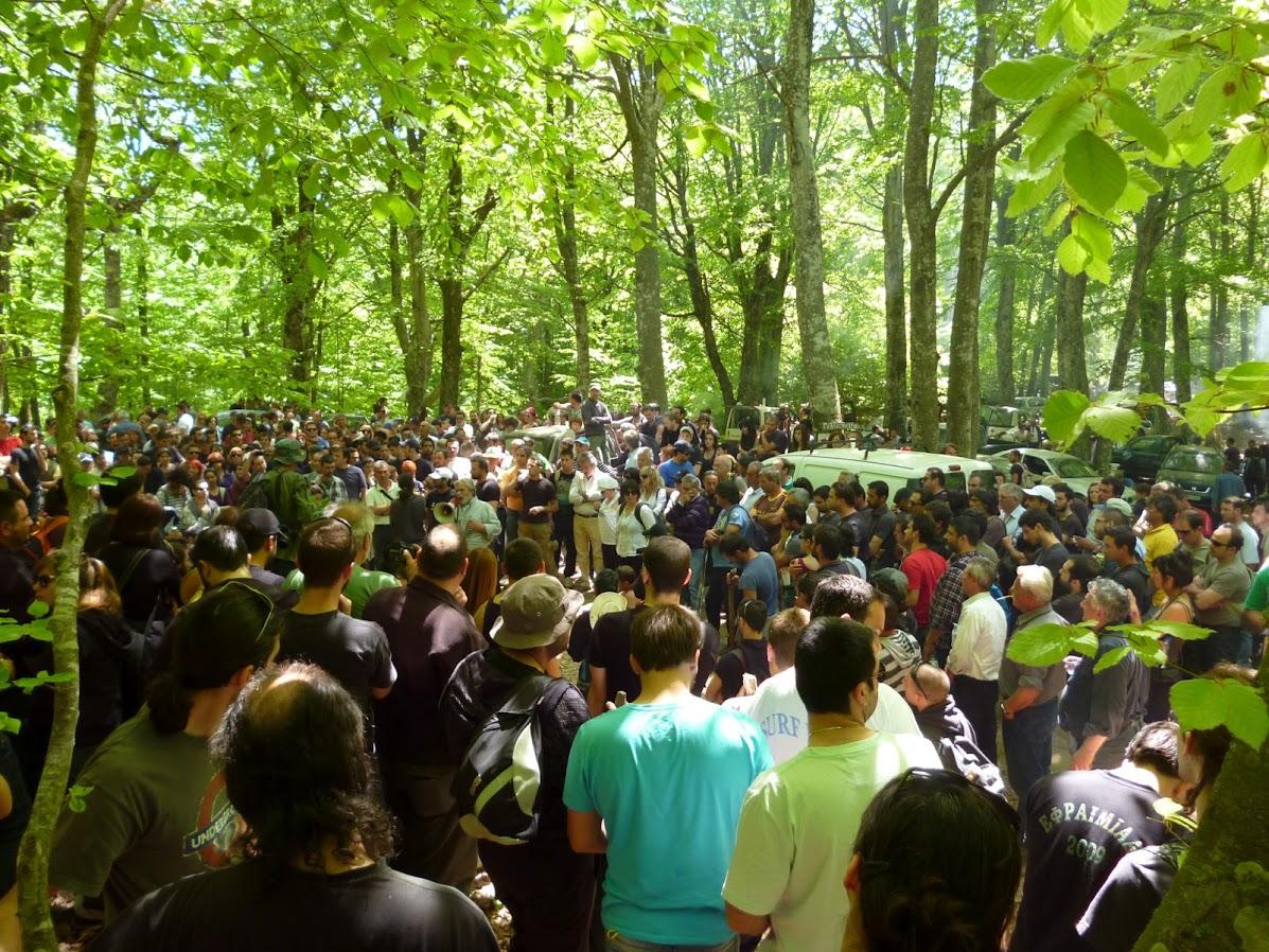 Ξεριζώνουν δάσος 4.000 στρεμμάτων στις Σκουριές
