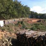 Συνάντηση των Οικολόγων Πράσινων με τον Εισαγγελέα Περιβάλλοντος για την υλοτόμηση του δάσους στις Σκουριές